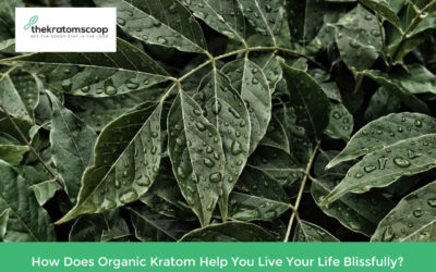 How Does Organic Kratom Help You Live Your Life Blissfully?