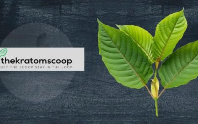 How Kratom Affects Your Work-Life? Find Out Now!