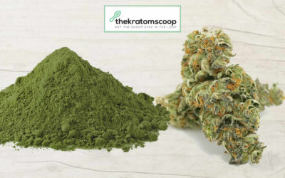 Kratom Or Marijuana: Which Is Better?