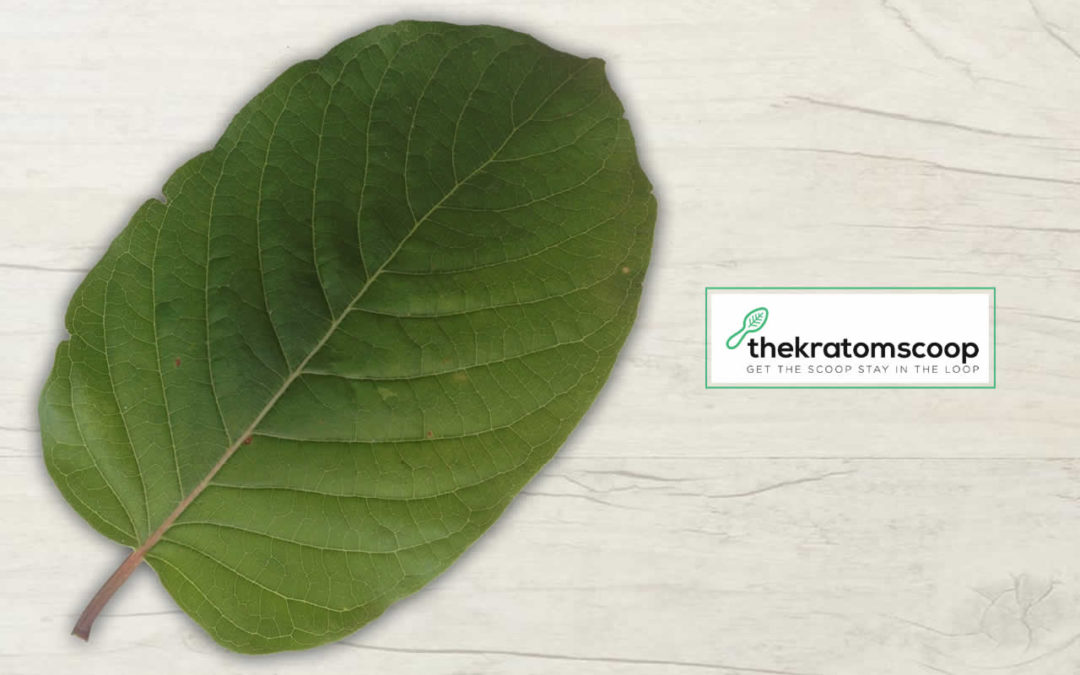 So You Never Heard About Kratom?